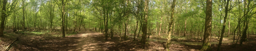 Springtime Forest Path by Sylzebub