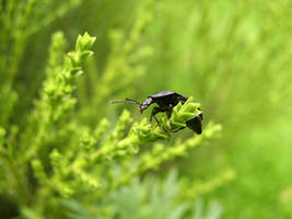 Hanging in the Light Green by MikhailD