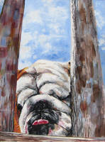 Rumba the bulldog by Wichrzyciel