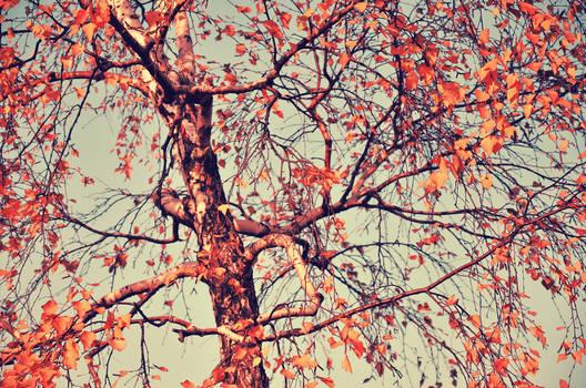 Autumn Sense