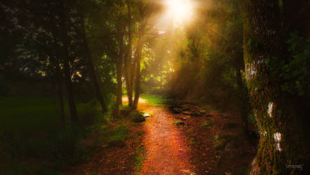 The path by CamillaSakar