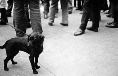 Cute dog eh by Reuno