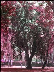 Tree of my Dreams by Dark-Rose-Memories
