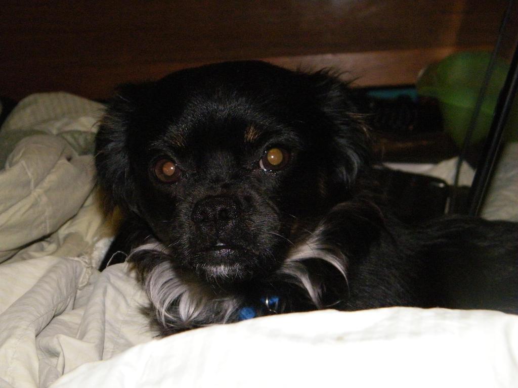 Riley 6/11/13 by LittleBitOfAlaska