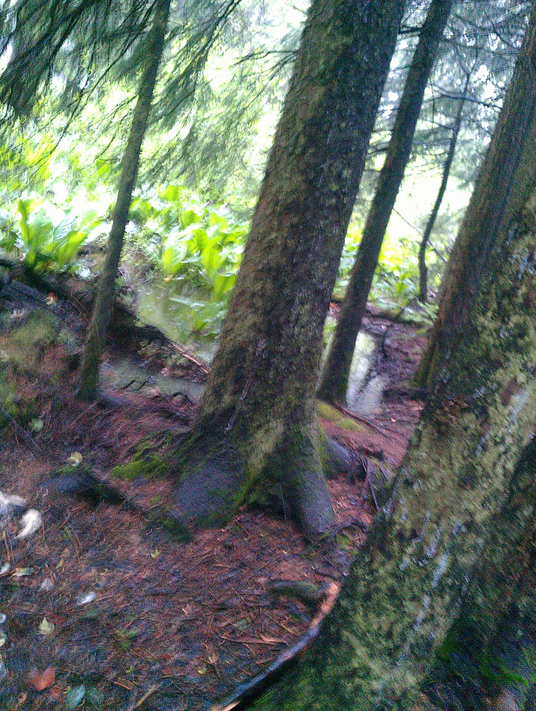 Forest by LittleBitOfAlaska