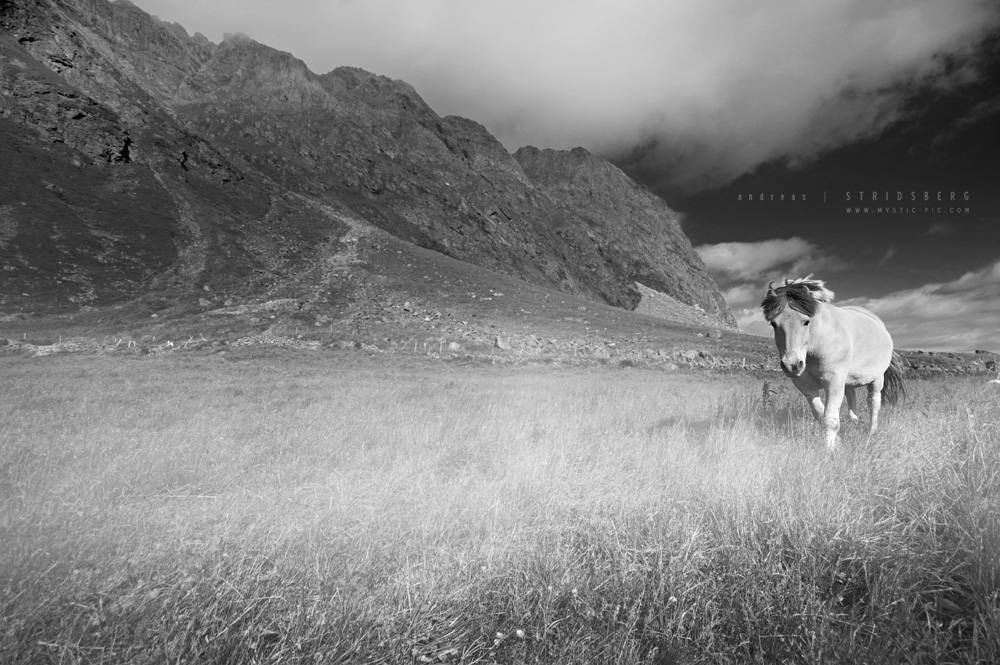 Horse by Stridsberg