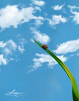 Straw-way to heaven by Stridsberg