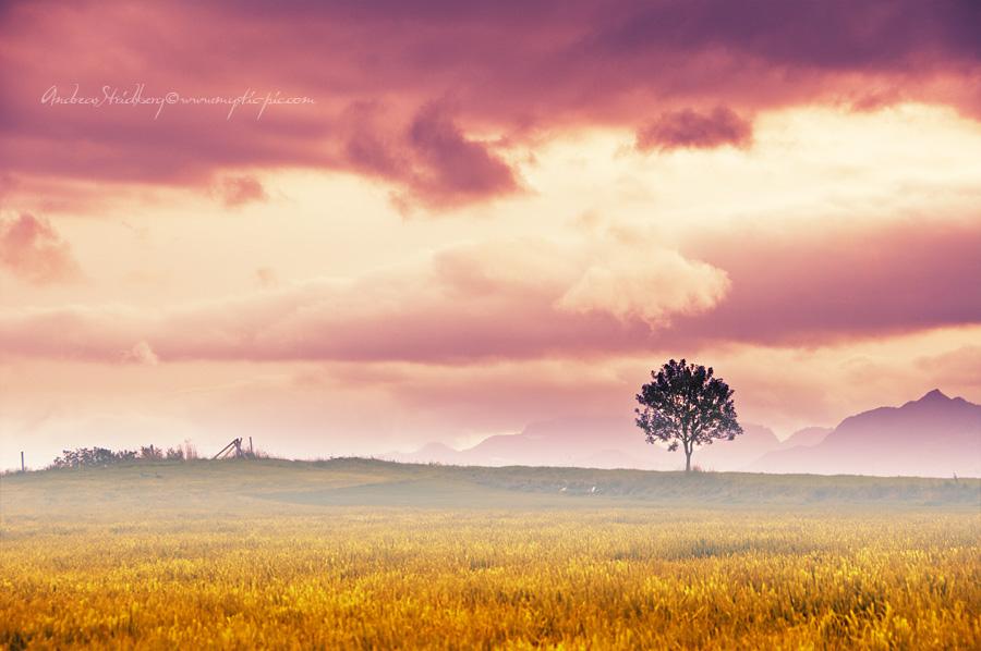 Pink Sky by Stridsberg