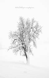 Frozen Tree by Stridsberg