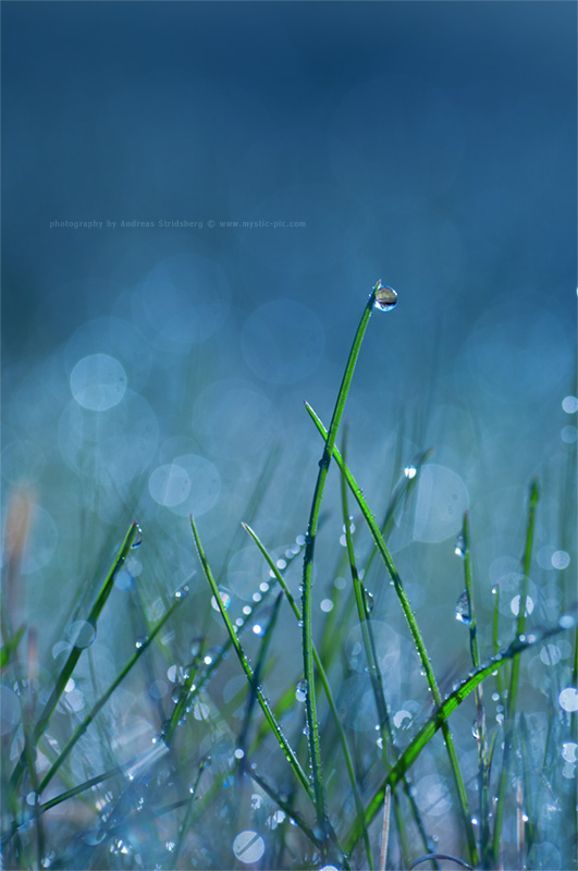 Blue by Stridsberg