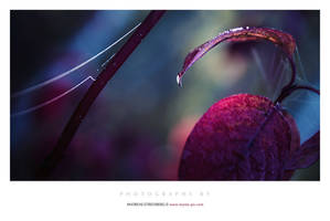 Dew Drop by Stridsberg