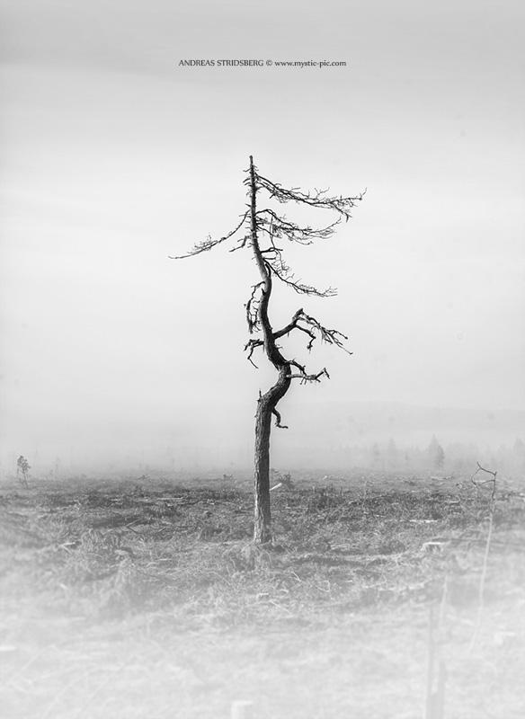 Isolation by Stridsberg