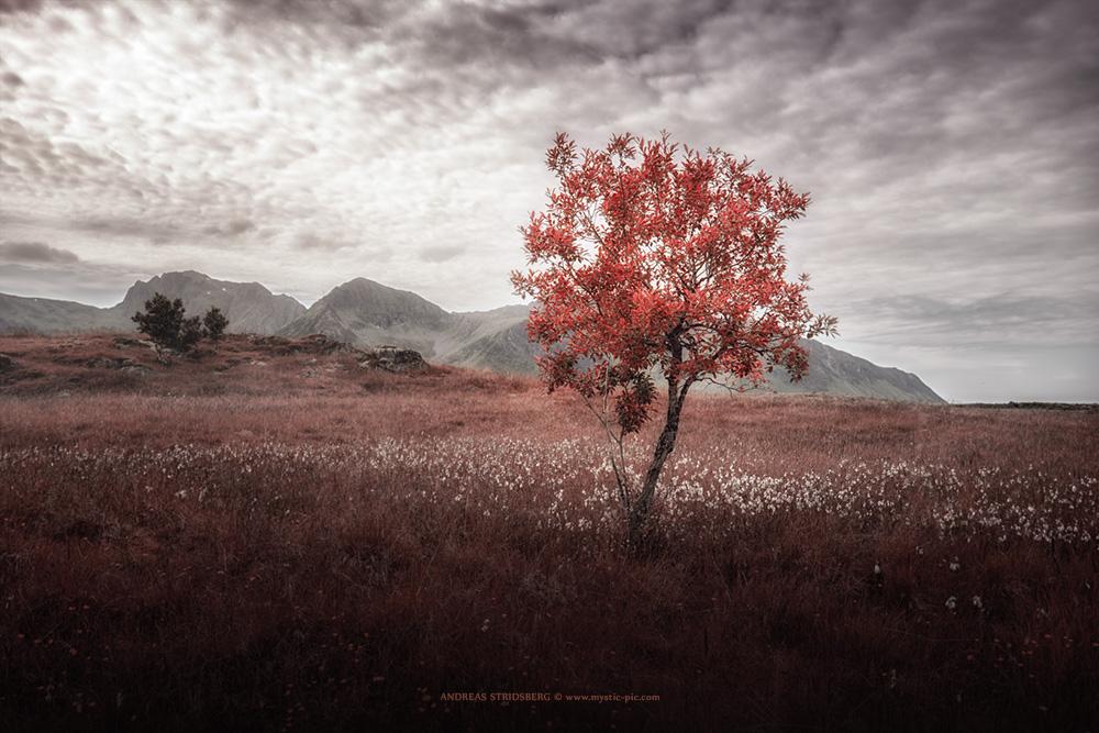 Red by Stridsberg