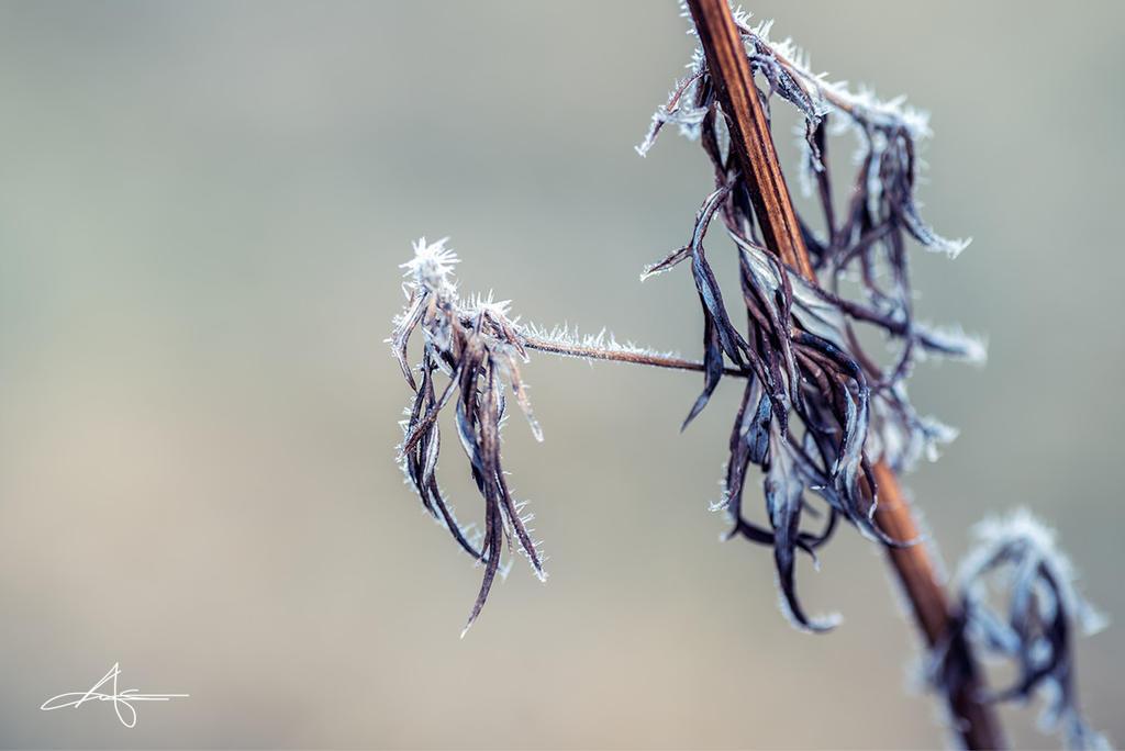 Frozen by Stridsberg