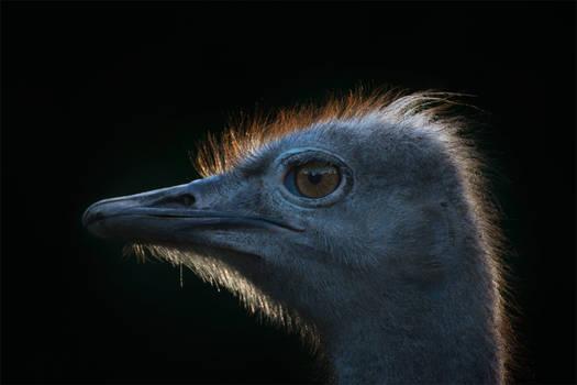 Ostrichized