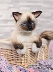 Handmade toy kitten