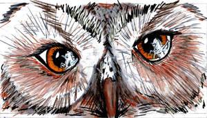 'The Owl'