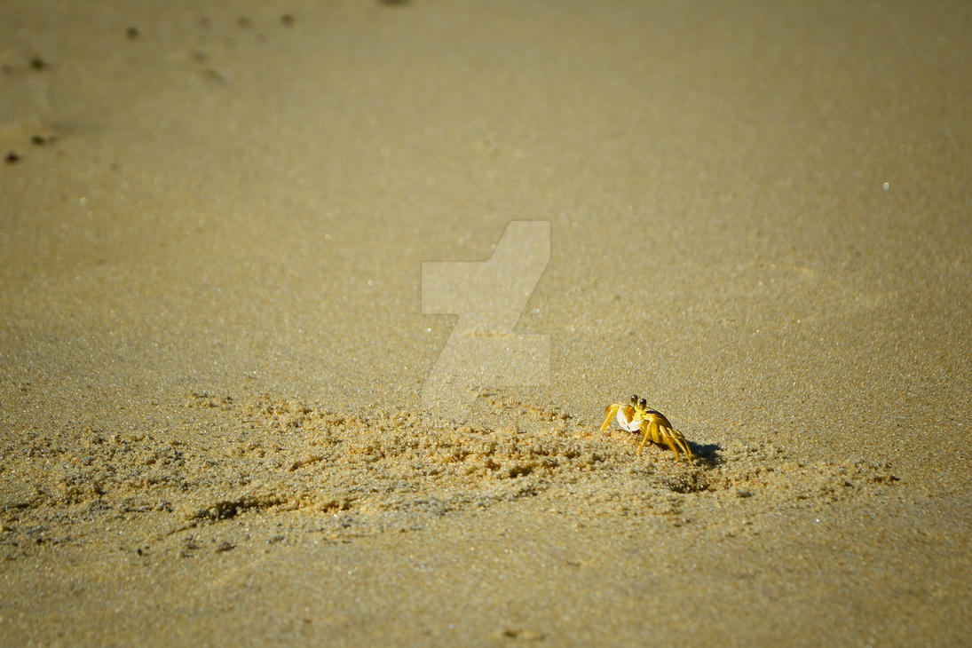 Crab on Sand by ewertonlima
