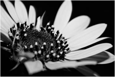 In The Dark by CoreyEacret