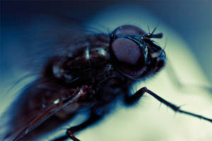 Fly In The Ointment - 3 by CoreyEacret