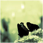 Butterflies Caught