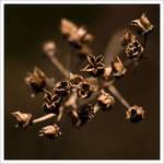 golden brown by neoloonatic