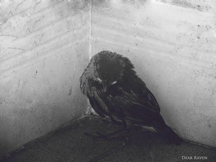 Scarred by Dear-Raven