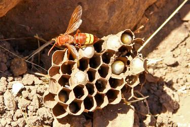 Wasps III by Harry-Paraskeva