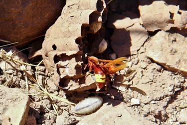 Wasps IV by Harry-Paraskeva