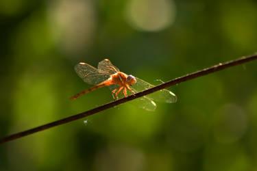 Bug On A Wire I by Harry-Paraskeva