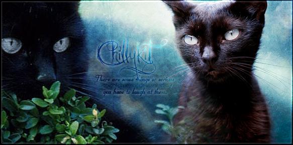 Chillykit by XxColdfuryxX