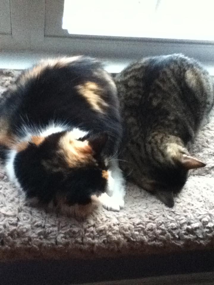 Cat Nap by Bandgirl101
