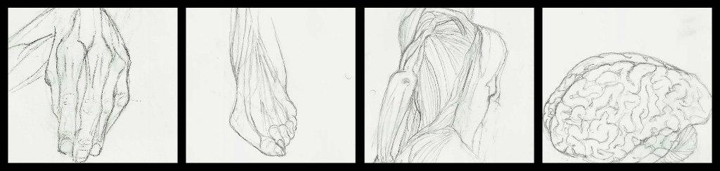 Anatomy Studies by kimisanasian