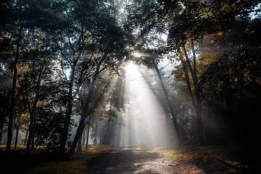 Fog by Eredel