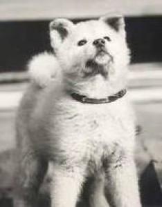 AkitakoRiki's Profile Picture