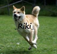 My dog Hachi by AkitakoRiki