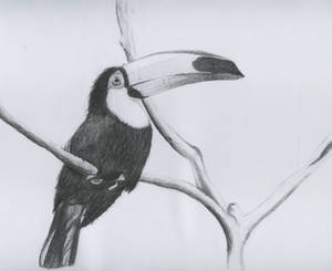 A toucan in a branch