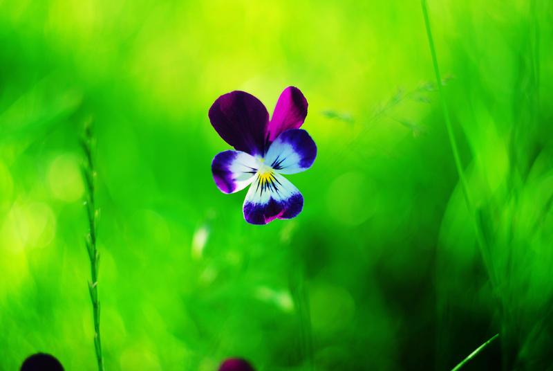 colourful by cheeidi