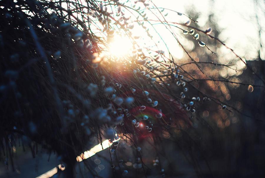 last rays by cheeidi