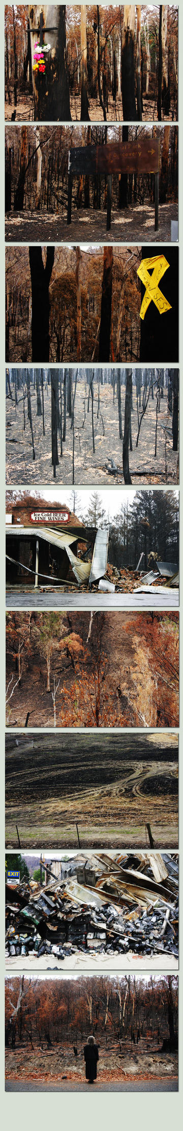 bushfire aftermath by Offering