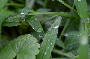 Dew on Grass by suprgrl1995