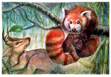 Palling Around - Red Panda and Reeves's Muntjac