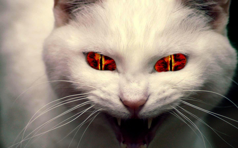 Evil Cat Pictures