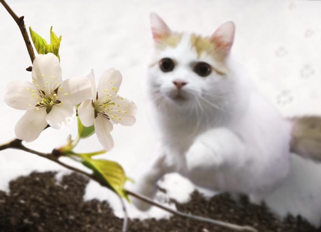 Fruehling - Nur ein Katzensprung entfernt by lenyca