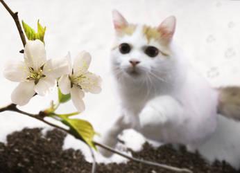 Fruehling - Nur ein Katzensprung entfernt