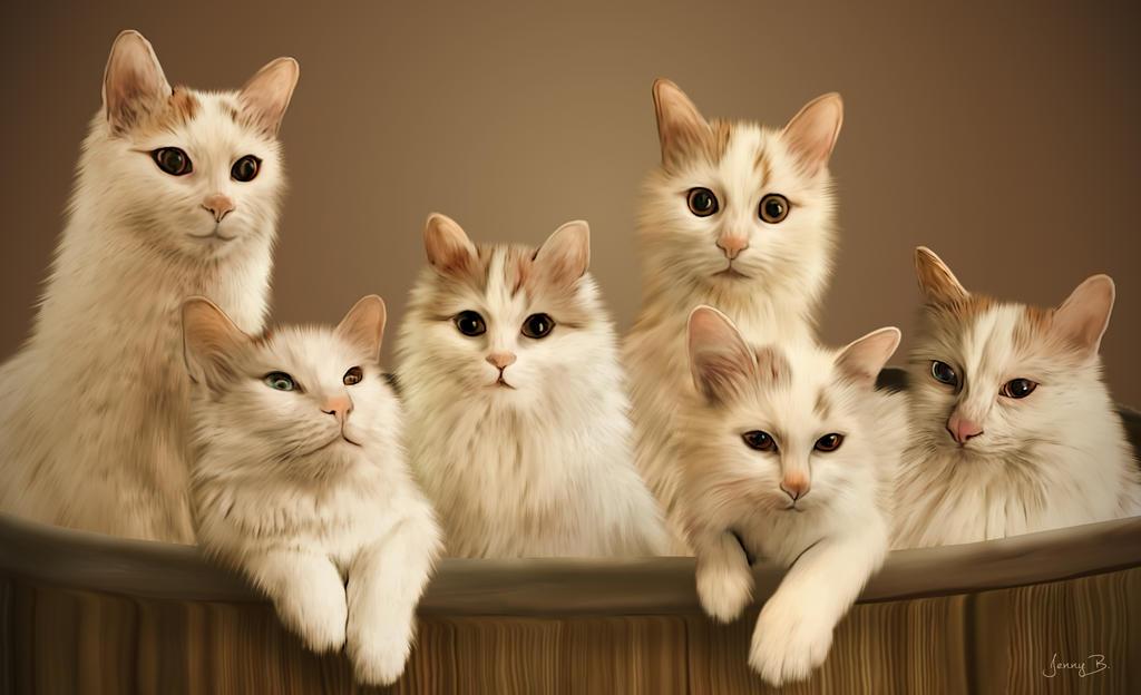 Turkish Van Cats by lenyca