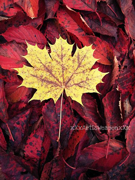 Autumn by xXxArtIsTheWeaponxXx