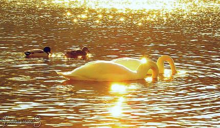 Mystic River by zalciolunkis