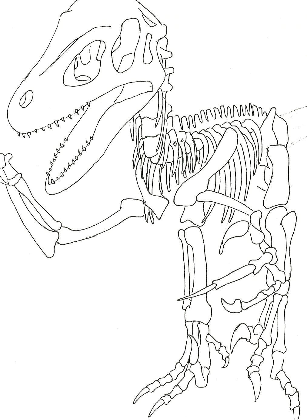 Utahraptor skeleton by sprywolf on deviantart for Utahraptor coloring page