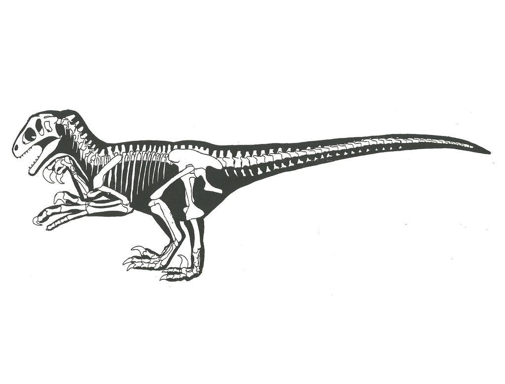 Utahraptor Skeleton Utahraptor skeleton outline byUtahraptor Skeleton
